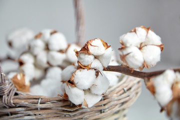 White cotton flowers in a basket