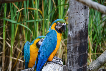 Macaw bird parrots sittng on tree branch
