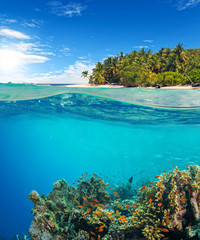 Poster Coral reefs Under and above water surface view of coral reef