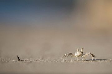 Close up of crab walking on sand