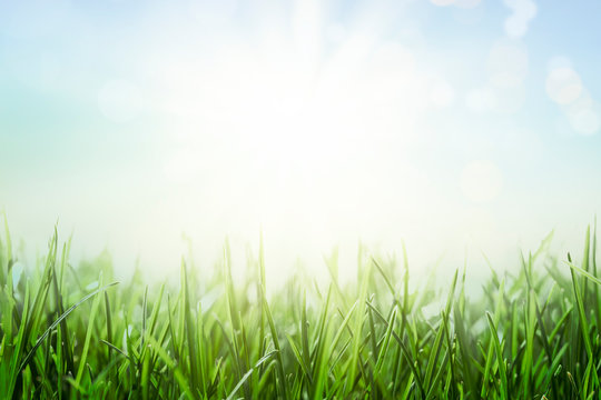 Background with green grass and sunny blue sky