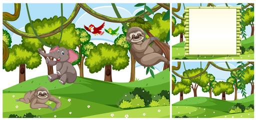 Set of Jungle animal scenes