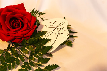 Red rose with green fern and an i love you on a white background.