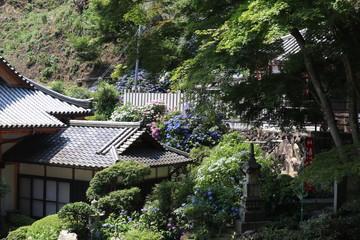 寺と紫陽花