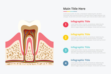 tooth structure infographic with some point title description for information template - vector