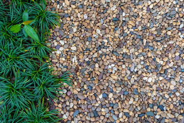 Gardening concept, small pebbles with green plant decorated in garden for walking path. Abstract background. Wall mural