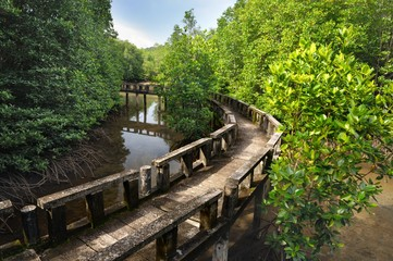 Cement walkway in mangrove forest on tropical Koh Chang island in Thailand