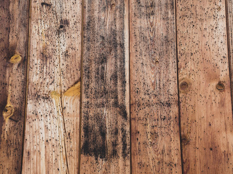 old wood board with some mold spots