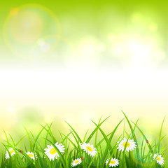 Green Spring or Summer Nature Background
