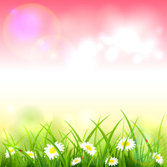 Pink Spring or Summer Nature Background with Grass and Flowers