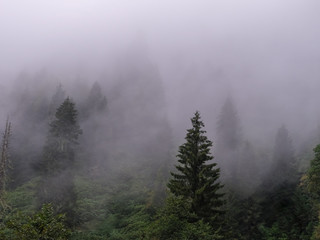 trees on mountain with mist