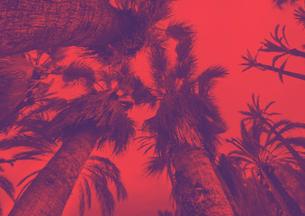 Coconut palm tree on the sky background, trendy duotone and halftone effect, 90's style