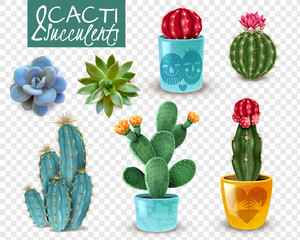 Cactus Succulent Realistic Transparent Set