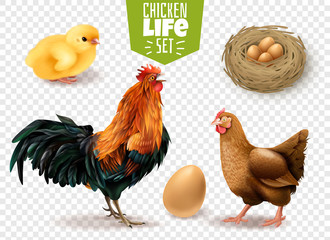 Chicken Life Transparent Set