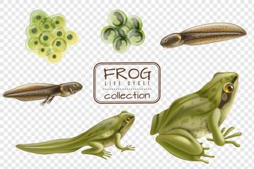 Frog Life Cycle Set