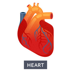 Vector flat illustrations, large human heart on a white background