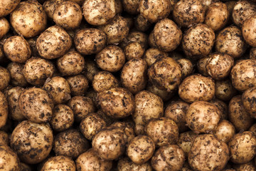 Potatoes for Sale in a pile