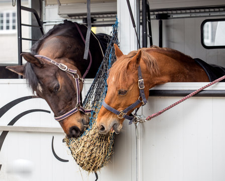 two horses eat hay