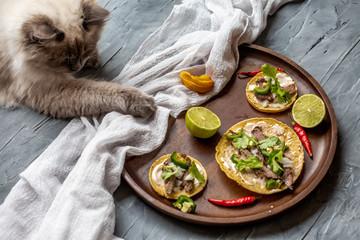 Katze und Essen verfressen