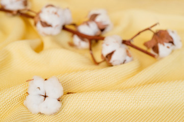 Delicate cotton flowers  textile clothes. Organic cotton clothing idea