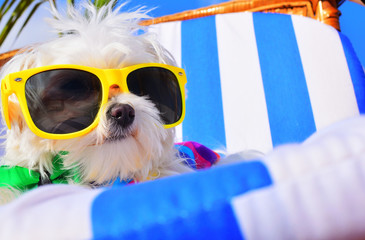 funny dog with sunglasses Wall mural