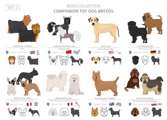 Companion and miniature toy dogs collection isolated on white. Flat style. Different color and country of origin