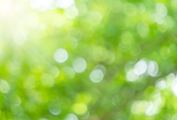 Green nature bokeh and sunlight for background