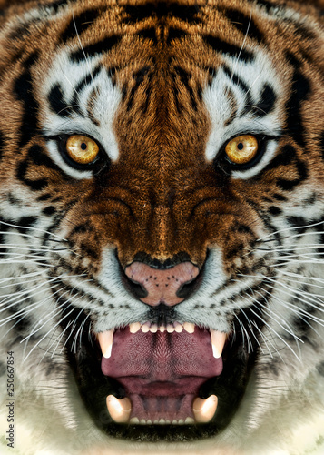 Angry Tiger Face Wallpaper Stock Photo And Royalty Free Images On