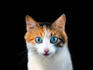 Emotional beautiful funny cat. Portrait of a cute cat isolated on black background