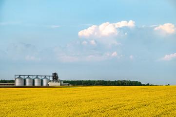 Agriculture farm silo yellow rape