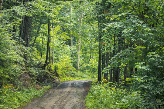 country road through forest. transportation background. summer nature scenery