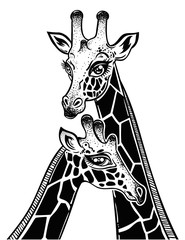 Two Giraffes as a pair of partners in love.