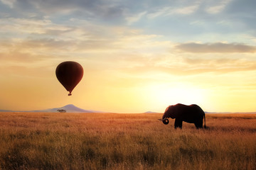 Wall Mural - African savanna elephant at sunset in the Serengeti National Park. Africa. Wildlife of Tanzania. Artistic African image. Free copy space.