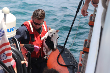 Coast Guard Cutter Valiant crew bring a dog aboard the cutter after evacuating more that 95 people and pets from St. Thomas