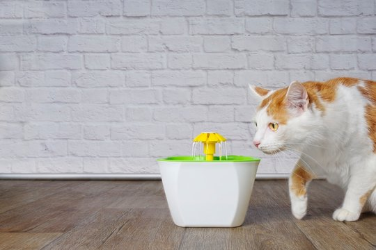 Cute tabby cat looking curious to a pet drinking fountain.
