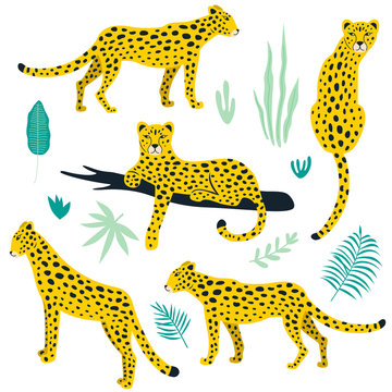 Set of leopards and tropical leaves. Vector