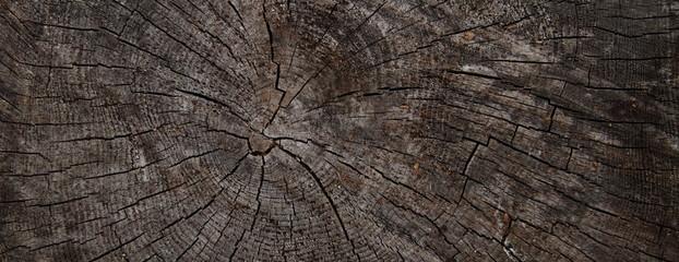 Baumscheibe als Hintergrund
