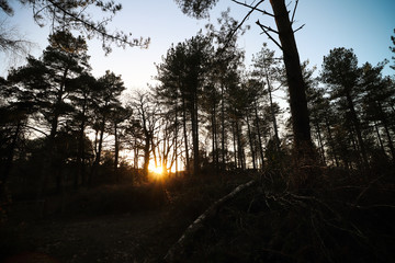 Sun set in the woods