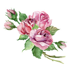 Set of beautiful roses bouquet, buds and leaves, watercolor illustration