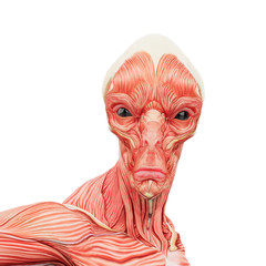 alien muscle maps on white background