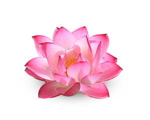 Wall Murals Lotus flower Lotus flower on white background