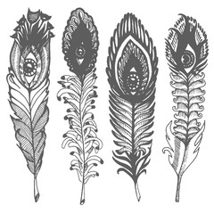 Vector Hand drawn sketch of abstract feather illustration on white background