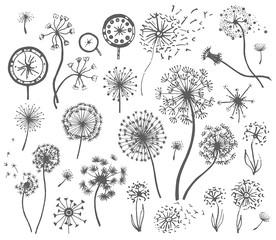 Vector Hand drawn sketch of dandelion flower illustration on white background