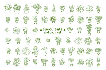 Set of and drawn line succulent plant isolated on white background. Vector illustration