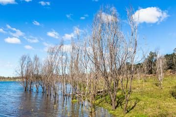 Dead trees reflected in the water in Glenbawn Dam, Upper Hunter, NSW, Australia.