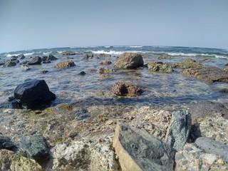 Corals, Jeddah, Saudi Arabia