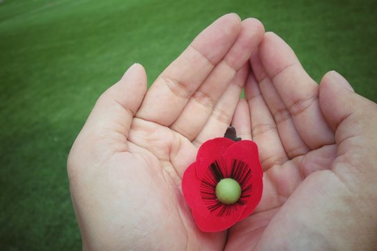 Hands holding a red poppy hand made from cloth, bunch of memorial day, with green grass background. Vintage style picture. Object concept.