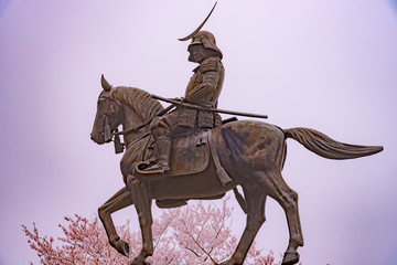 A statue of Masamune Date on horseback entering Sendai Castle in full bloom cherry blossom, Aobayama Park, Sendai, Miyagi, Japan