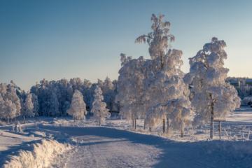 frozen Landscape - Erstarrte Landschaft