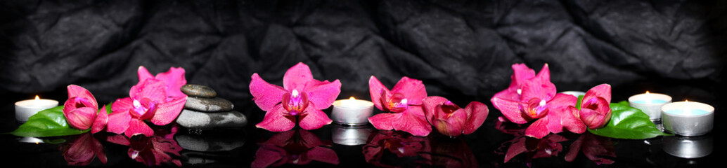 Panoramic image of purple orchids on a black background